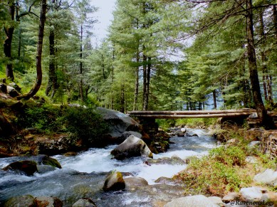 Pic7 - Hike in Pine Forests.JPG